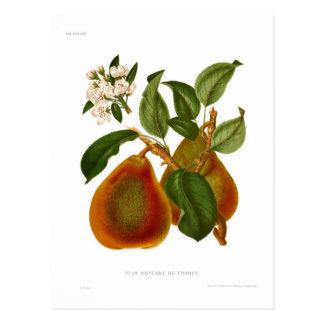 Doyenne du Comice Pear Postcard