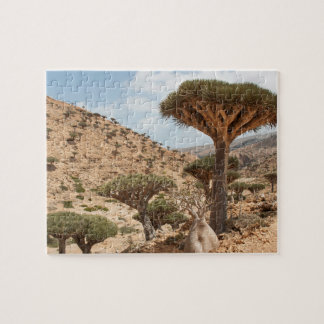 Dragon Blood Tree forest, Socotra Island, Yemen Puzzle