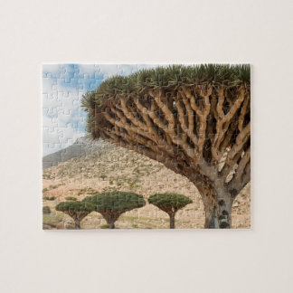 Dragon Blood Tree forest, Socotra Island, Yemen Puzzles