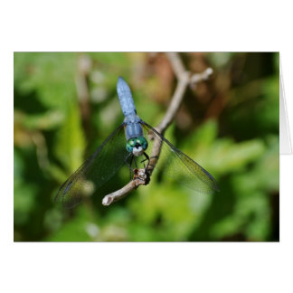 Dragon Fly Card