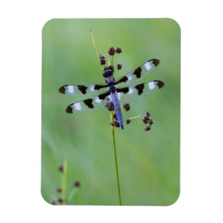 Dragon fly perched on grass, Canada Magnet
