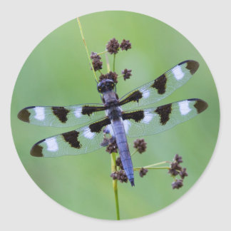 Dragon fly perched on grass, Canada Round Sticker