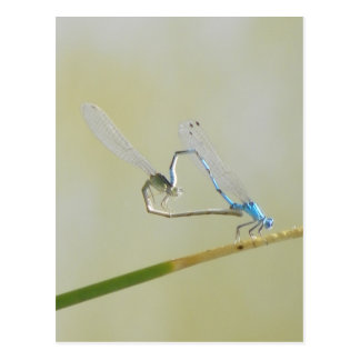 dragonflies in love postcard