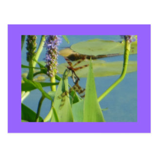 Dragonflies on Aquatic Plant Postcards