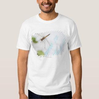Dragonfly 4 t shirt