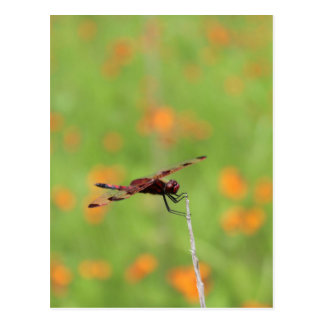 Dragonfly and Orange Flowers Postcard