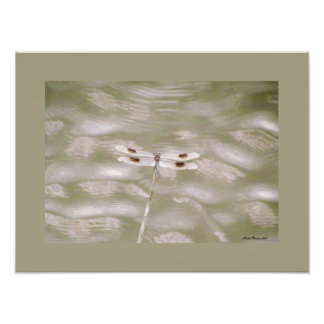 Dragonfly by Linda Becker Photo Print