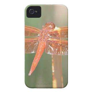Dragonfly Case-Mate iPhone 4 Case