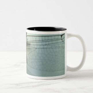 Dragonfly close-up Two-Tone coffee mug