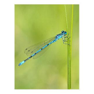 Dragonfly, damselfly postcard