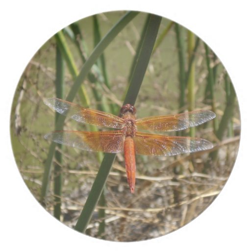 Dragonfly Decorative Plate