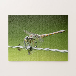Dragonfly Defies Barbed Wire Jigsaw Puzzle
