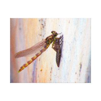 Dragonfly Emergence Canvas Print