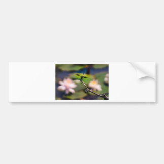 Dragonfly Handstand by Erina Moriarty Photography Bumper Sticker