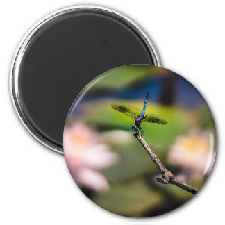 Dragonfly Handstand by Erina Moriarty Photography Magnet