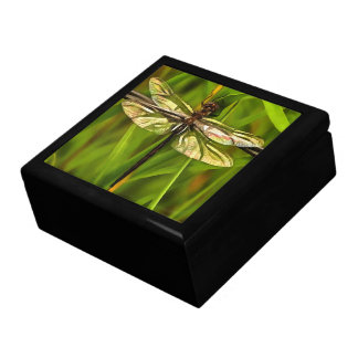 Dragonfly In Brown And Yellow Gift Box