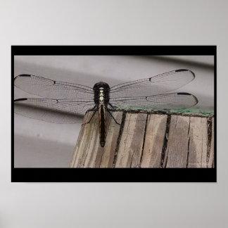 Dragonfly Landing Poster