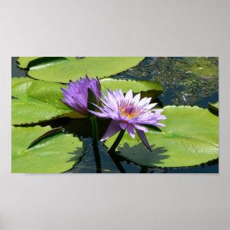 Dragonfly Lotus Poster