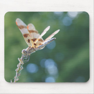Dragonfly, Mousepad