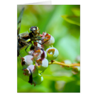Dragonfly on Blueberries Card