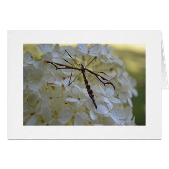 Dragonfly on Hydrangea Card