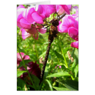 Dragonfly on Sweet Peas Card