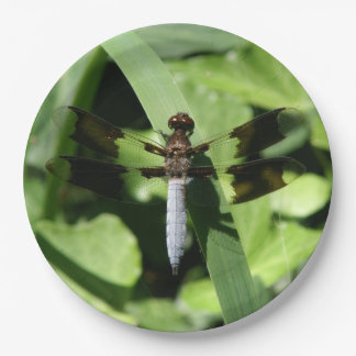 Dragonfly, Paper Plates. Paper Plate