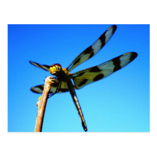 Dragonfly Perched Postcard
