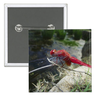Dragonfly perching on branch, close up 15 cm square badge