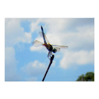 Dragonfly ~ Prepare for Take-off Poster