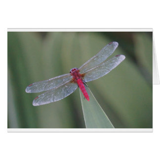 DRAGONFLY RD IN RURAL QUEENSLAND AUSTRALIA GREETING CARD