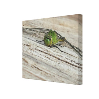 Dragonfly Rustic Canvas Print
