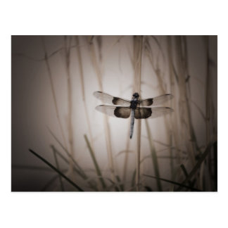 Dragonfly - Vintage look Postcard