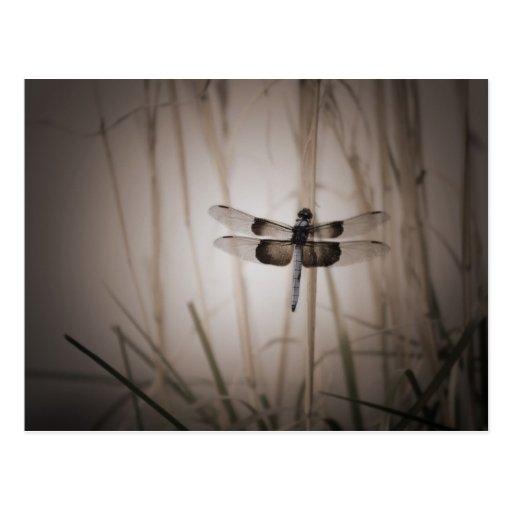 Dragonfly - Vintage look Post Card