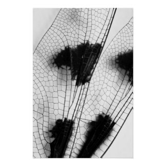 Dragonfly Wings Poster