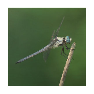 Dragonfly, Wood Photo Print. Wood Print