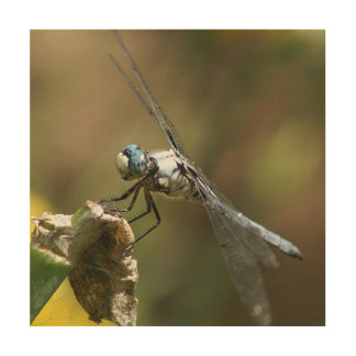 Dragonfly, Wood Photo Print. Wood Prints