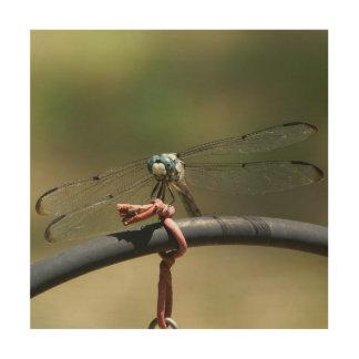 Dragonfly, Wood Photo Print. Wood Prints