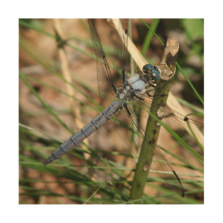 Dragonfly, Wood Photo Print. Wood Wall Art