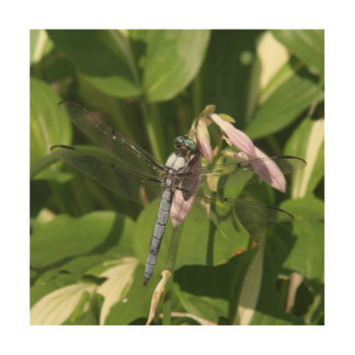 Dragonfly, Wood Photo Print. Wood Wall Decor