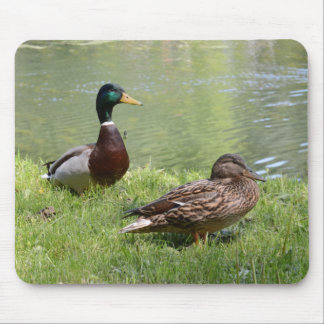 Drake and duck in the wild mouse pad