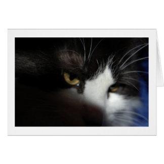 Drama Cat Eyes Card