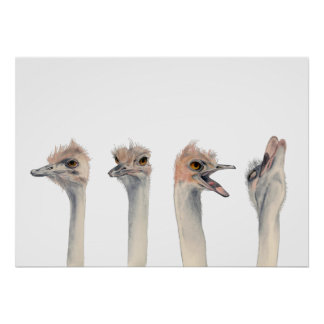"""""""Drama Queen"""" Funny Ostriches Painting Poster"""