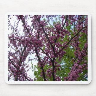 Dramatic Deep Pink Flowering Trees New York City Mousepad