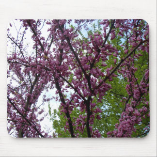 Dramatic Deep Pink Flowering Trees New York City Mouse Pad