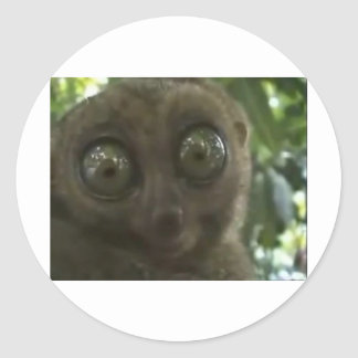 Dramatic Lemur Classic Round Sticker