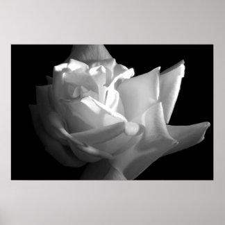 Dramatic Rose Print