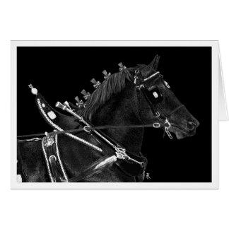 "Draught   Horse Note Card - ""Percheron Power"""