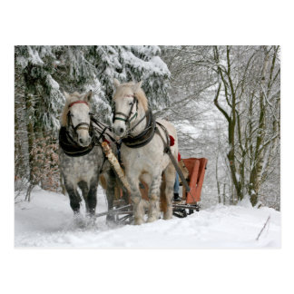 Draught   Horses Christmas Postcard