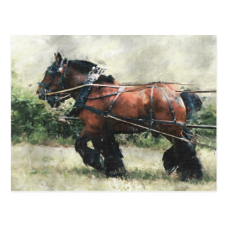 Draught   horses in harness postcard